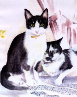 cute black and white cats